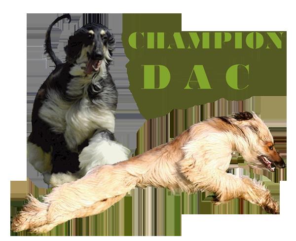 DAC Champion